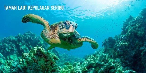 Taman Laut Kepulauan Seribu