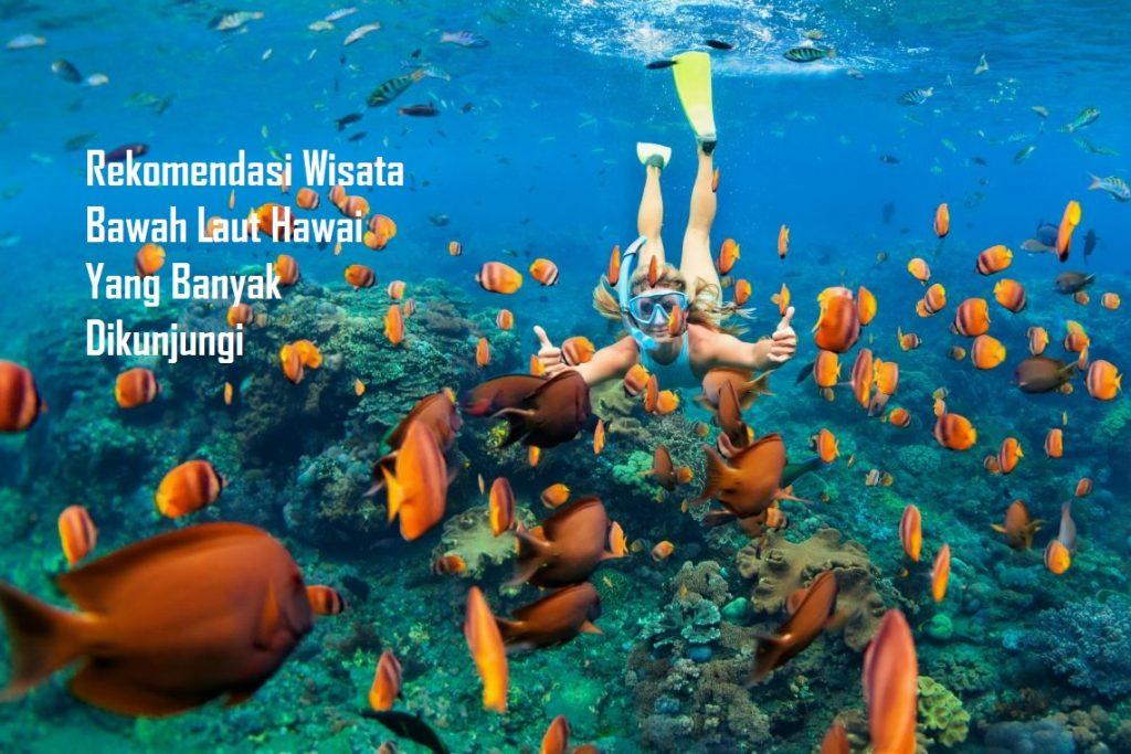 Rekomendasi Wisata Bawah Laut Hawai Yang Banyak Dikunjungi