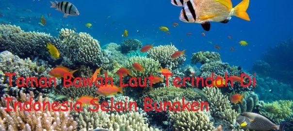 Taman Bawah Laut Terindah Di Indonesia
