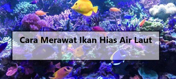 Cara Merawat Ikan Hias Air Laut